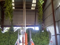 Goschie Hop Farms