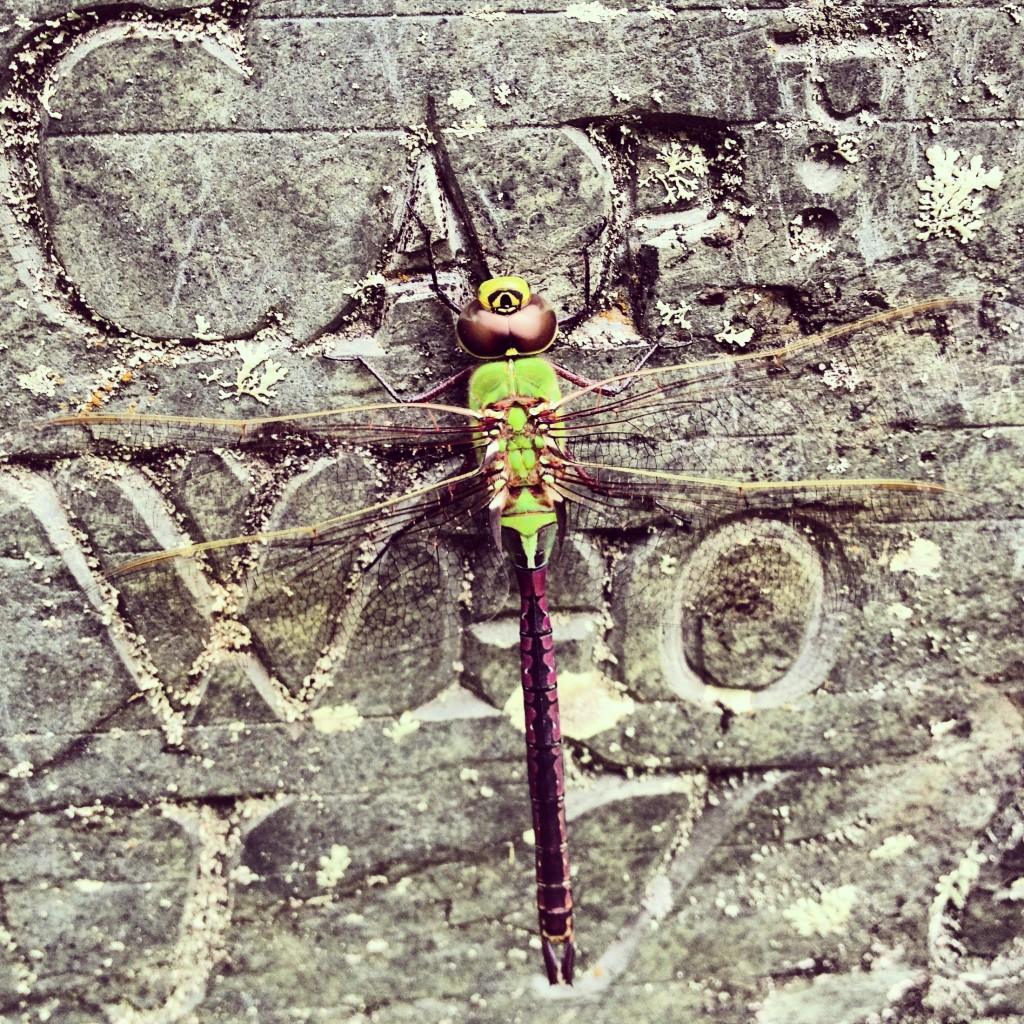 ...a dragonfly, that's who.